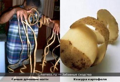 Самые длинные ногти в мире похожи на картофельную кожуру