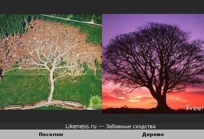 Поселок похож на дерево