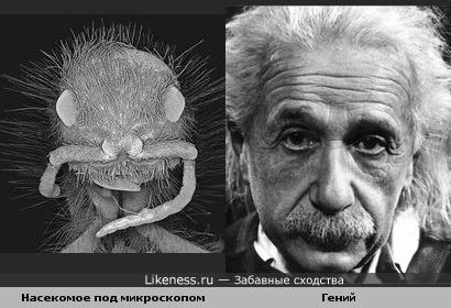 Насекомое почему-то напомнило Эйнштейна...