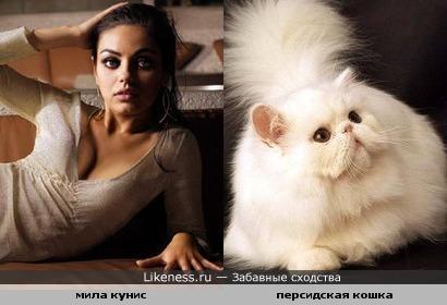 Мила Кунис напоминает кошку