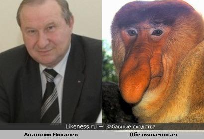 Мэр Читы Анатолий Михалёв похож на обезьяну