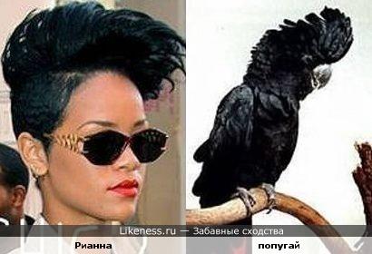 Рианна и попугай похожи:)
