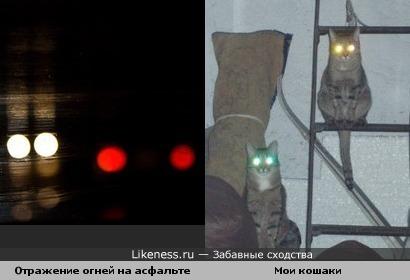 Глаза котов при фспышке и отражение огней на мокром асфальте