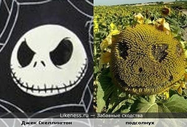 Кошмарный подсолнух)