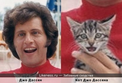Джо Дассен и его кот)))