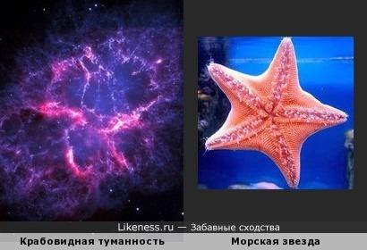 Крабовидная туманность в созвездии Тельца и морская звезда