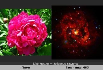 Рентгеновские лучи молодой сверхновой в галактике M83 и пион