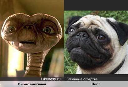 Инопланетянин из одноимённого фильма похож на мопса