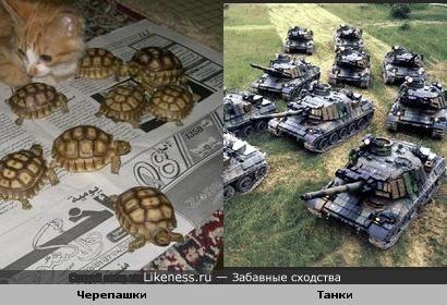 Черепахи похожи на танки.