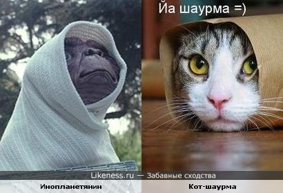 Инопланетянин из одноимённого фильма напомнил мне кота-шаурму