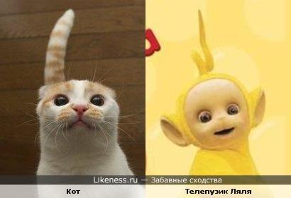 Кот похож на Телепузика