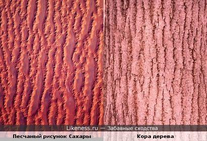 Песчаный рисунок Сахары (фото из космоса) похож на кору дерева.