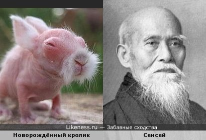 Новорождённый кролик похож на сенсея
