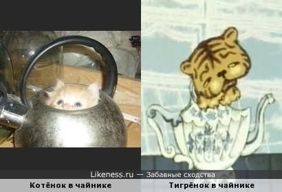 Кошачьи в чайнике