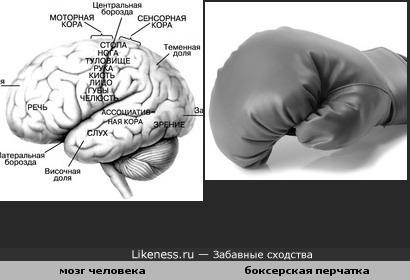 мозг человека и боксерская перчатка