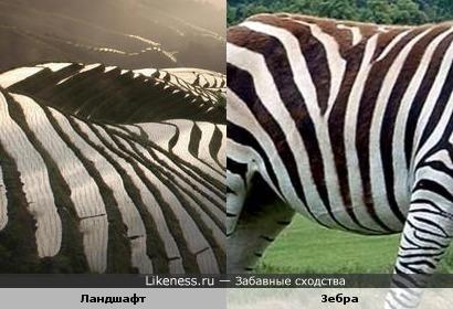 Ступенчатые холмы напоминают рисунок на шкуре зебры