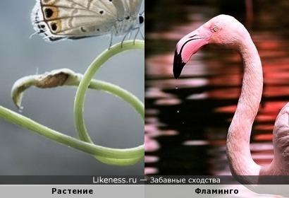 Побег растения, на который села бабочка, напомнил фламинго
