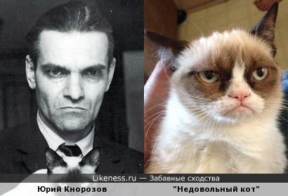 Юрий Валентинович, мы нашли вашего кота!