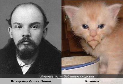 Испачканный кот похож на Ленина