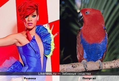 Карибские певица и попугайчик похожи