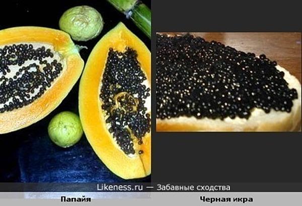 Зерна папайи похожи на зерна черной икры.