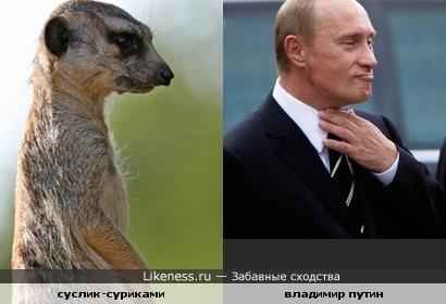 Путин похож на суслика-суриками
