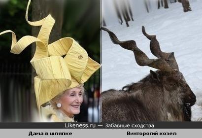 Шляпка похожа на рога винторогого козла