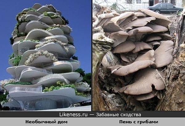Необычный дом похож на пень, усеянный грибами