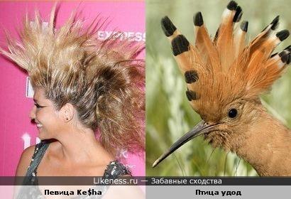 Певица Ke$ha своей прической напомнила удода