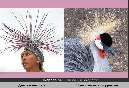 Дама в шляпке похожа на прелестного венценосного журавля