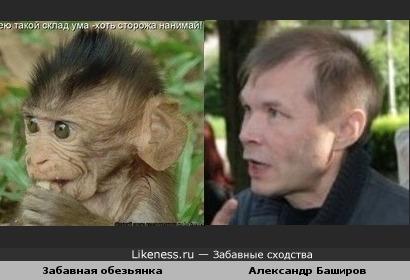 Обезьянка похожа на Александра Баширова (или наоборот)