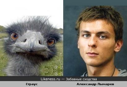 Этот гордый страус неожиданно похож на Александра Лымарева