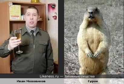 "Иван Моховиков (""Солдаты"") и сурок похожи"