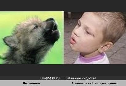 Волчьи законы жизни - один малыш впитал их с молоком, другой - привыкает...