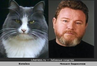 Кот напомнил Михаила Евдокимова (думаю, Он не обиделся бы, сам был юморной)