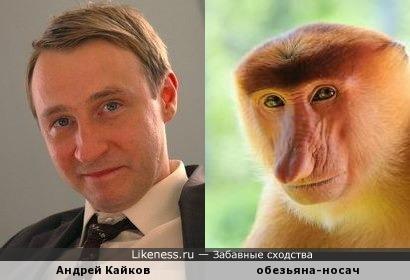 Андрей Кайков похож на обезьяну носача