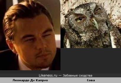 Леонардо Ди Каприо похож на сову