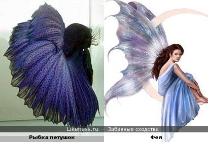 Рыбка похожа на сказочную фею