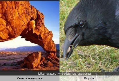 Скала похожа на ворона