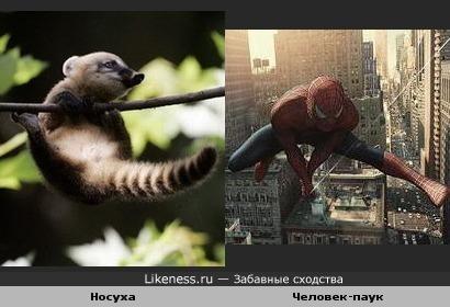 Зверек напомнил Человека-паука