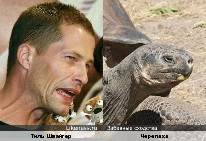 Тиль Швайгер и черепаха