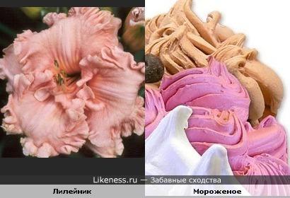 Цветок похож на мороженое