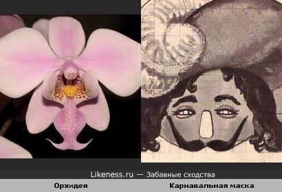 Цветок похож на карнавальную маску
