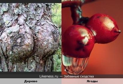 Дерево и ягоды