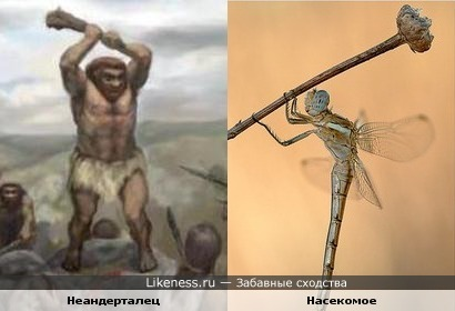Обезьяна взяла в руки палку и стала человеком. Что же будет с насекомым?
