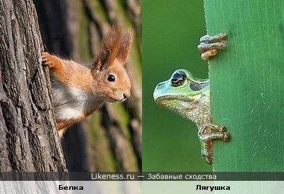 Белки против лягушек