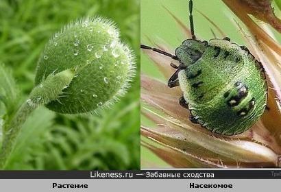 Бутон растения и жук