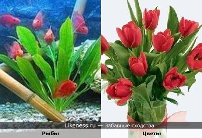 Рыбки в аквариуме и букет цветов