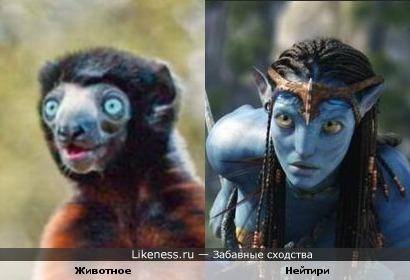 """Животное напоминает персонажей фильма """"Аватар"""""""