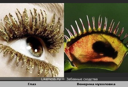 Я тебя вижу. Растение похоже на глаз